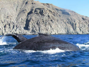 todos_santos_whale_watching.jpeg