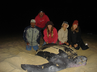 SeaTurtles/volunteers2009.jpg